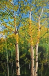 The Trees of Aspen Woods